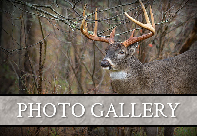 Carter Outfitting LTD Photo Galleries